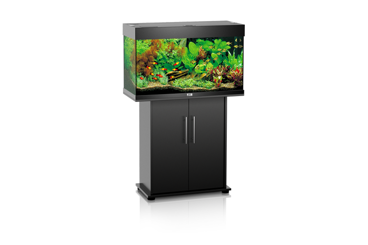 ensemble aquarium et meuble juwel rio 125 aux poissons exotiques. Black Bedroom Furniture Sets. Home Design Ideas